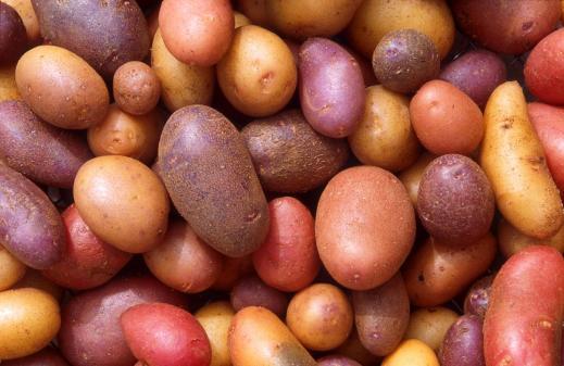 תפוחי אדמה שונים ומגוונים