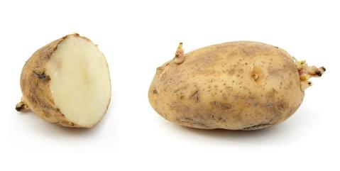 תפוח אדמה ראסט