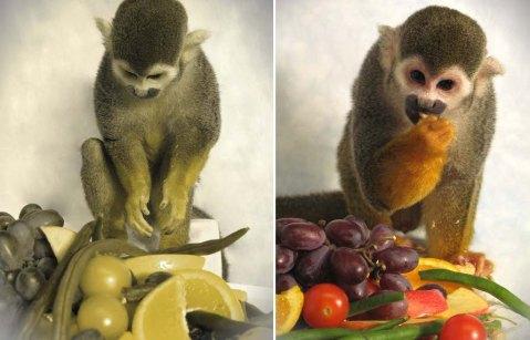 """הקוף דלטון כפי שרואה אותו מישהו עם עיוורון צבעים לאדום-ירוק (שמאל) וכפי שרואה אותו מי שהראייה שלו """"נורמלית"""" - מבוססת על שלושה צבעים (ימין)."""