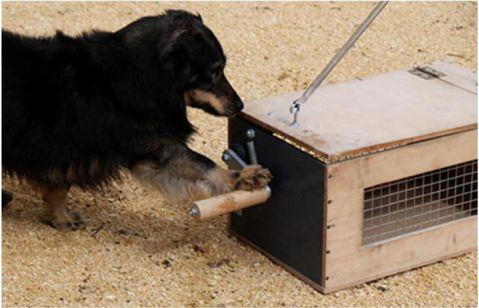 כלב פותח קופסה