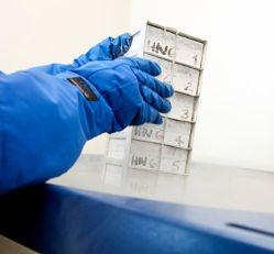 הוצאת תאי T מסייעים מהונדסים גנטית מהאחסון, לבדיקות אחרונות לפני העירוי.