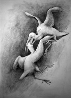 מגלנים קדומים נאבקו באמצעות כנפיים המותאמות לצורך לחימה.