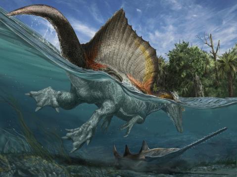 ספינוזאורוס שוחה אחרי דג מסור