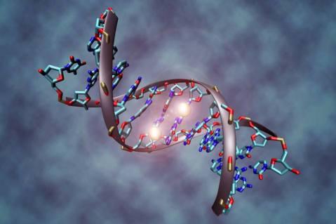 מתילציה של שני נוקלאוטידים ב-DNA