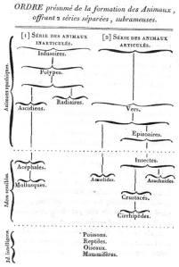 התפתחות בעלי החיים על פי למארק