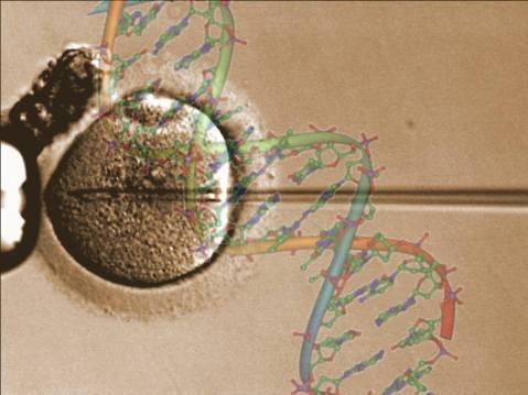 הפריה חוץ-גופית בשיטת ICSI (הזרקת זרע ציטופלזמטית) ואיור DNA