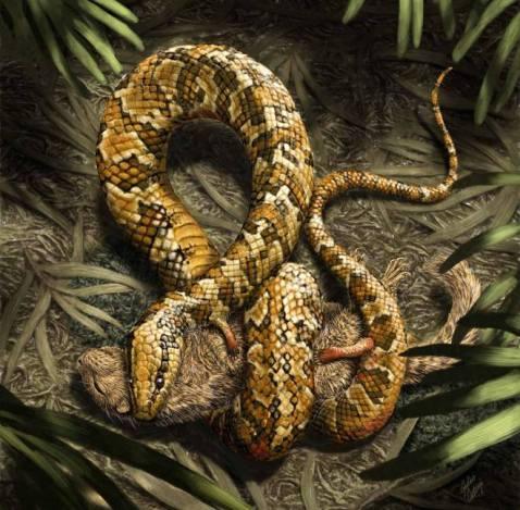 איור של הנחש טטרפּוֹדוֹפיס בפעולה.