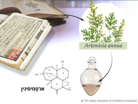 טו יויו מצאה בעזרת ספרים סיניים עתיקים את הצמח לענה חד שנתית. לאחר שנות עבודה רבות היא הפיקה ממנו ארטמיסינין, תרופה נגד מלריה