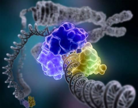 אנזים מיוחד, DNA ליגאז, מקיף את הסליל הכפול כדי לתקן גדיל DNA פגום.