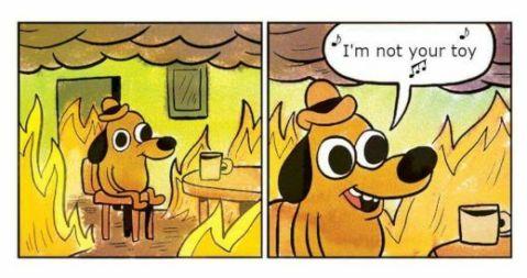 ישראל: תמונת מצב. כלב יושב בחדר בשריפה ושר את השיר של נטע ברזילי