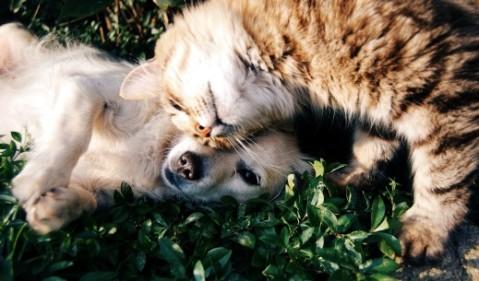 חתול וכלבלב