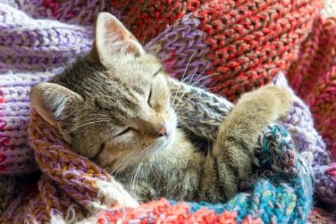 גור חתולים ישן